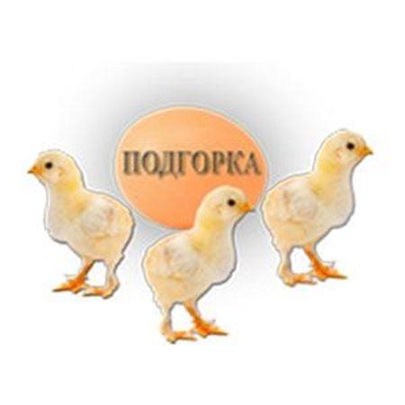 Слика за продавачот ПОДГОРКА дооел